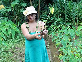 古代ハワイアンの知恵を学ぶ「緑の学校」へ