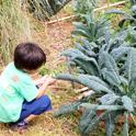 野菜がいっぱい!尾辻農園のファームツアー