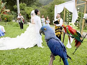 大好きな鳥が参列したマノアのウエディング