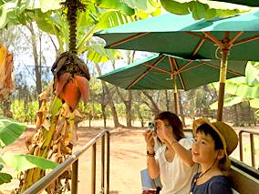 ハワイで自由研究その1:ハワイ産を知る