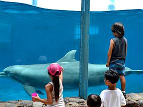 ハワイで自由研究その3:海の生き物たち