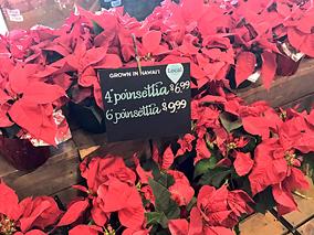 ハワイのスーパーで見つけたクリスマス