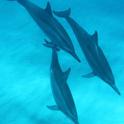 イルカとクジラが待つ冒険の海へ行こう!