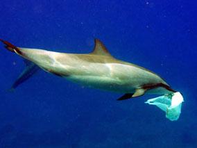 イルカの海で自然について考えよう