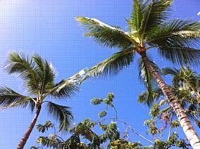 日本に届け! ハワイの「Love&Aloha」