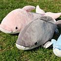 イルカと遊んでぬいぐるみをもらおう!