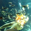 感謝祭ブランチ&ディナーは海の仲間と