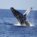 冬はお得!イルカの待つハワイの西海岸へ