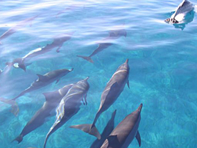 野生のイルカと泳ぐツアーが3月までお得