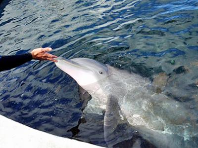 シー・ライフ・パークに新イルカが仲間入り