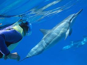 子ども半額!イルカと泳ぐ人気ツアーがお得