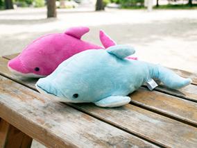 イルカとの思い出とぬいぐるみを両方ゲット