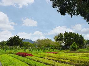 アウラニの新ツアーで有機農園へ行こう