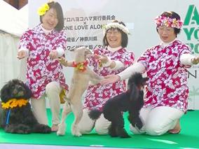 ワンちゃんとGo!横浜のアロハイベント