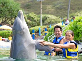 イルカともっと遊べる!新プログラム