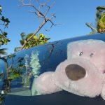 ハワイの風 お気楽サーフィン日記