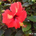 ♡LOVE HAWAII♡ REXのハワイ情報