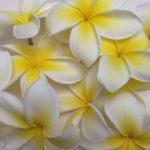 フラとハワイの日記