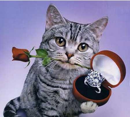★あなたがされたいプロポーズって??