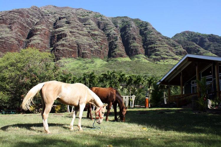 待望のマカハ渓谷乗馬ツアーがカムバック!