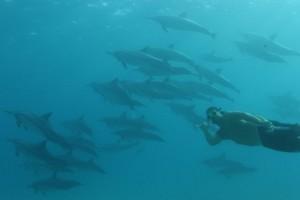 イルカと一緒に泳いでいるのは