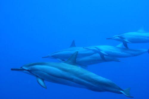 イルカのオスとメス