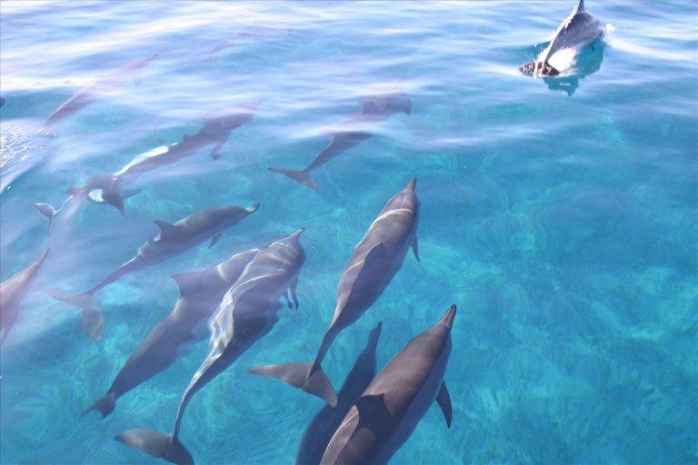 冬もイルカと泳ごうウィンターキャンペーン