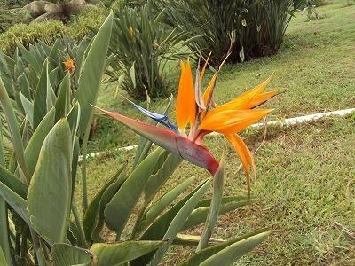 ハワイの美しい花を見に行こう!