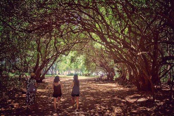 英語での交流+ハワイを堪能できるツアー