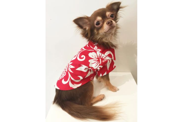 ワンコに着せたい!ハワイ生まれのアロハウェア