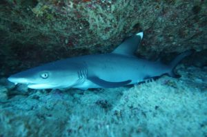 サメは怖くないよ!
