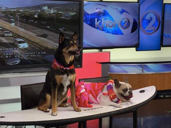 サーファー犬イベント告知のテレビ放映