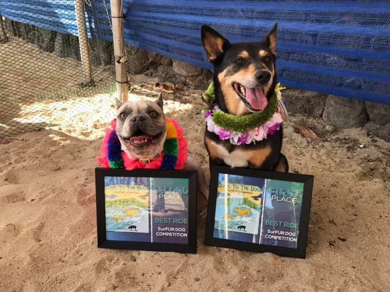 サーフィン犬コンテスト結果発表