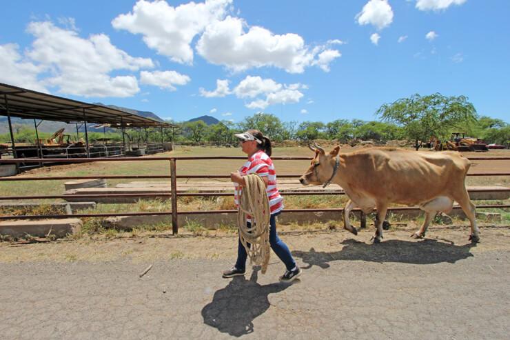 ハワイの「名人」〜オアフ島唯一の牛飼い名人編〜
