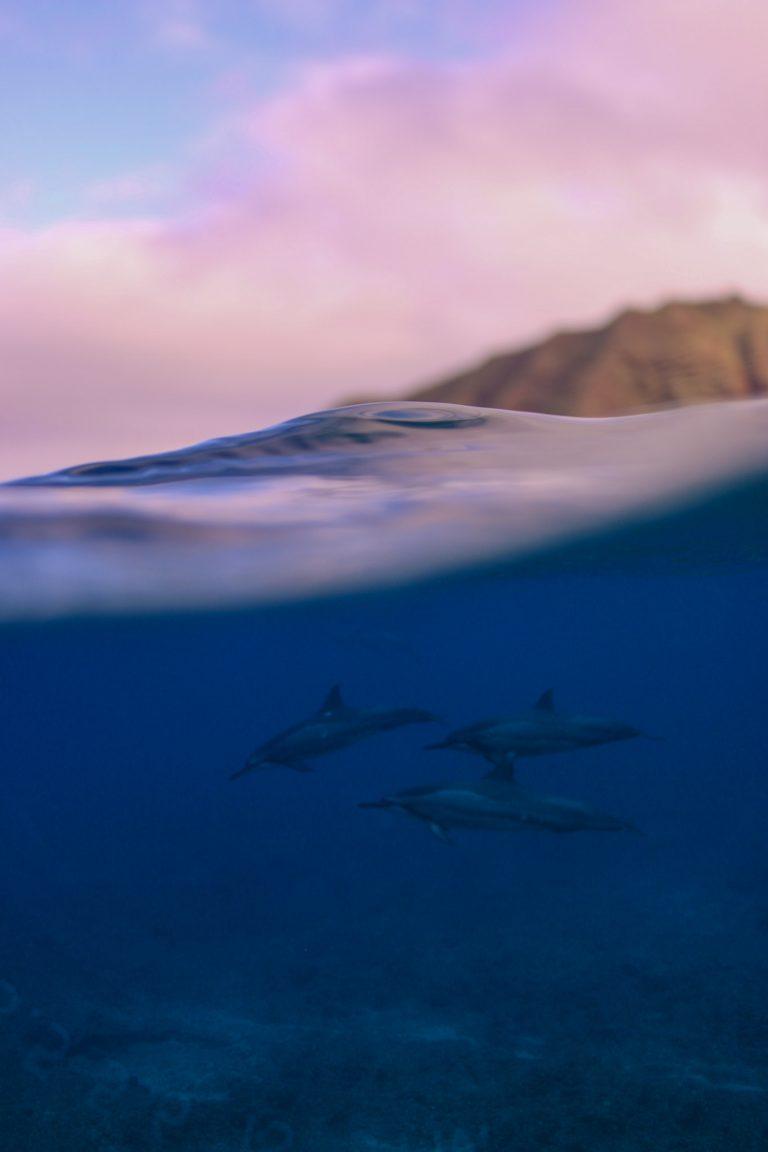 イルカと過ごす冬のハワイの朝