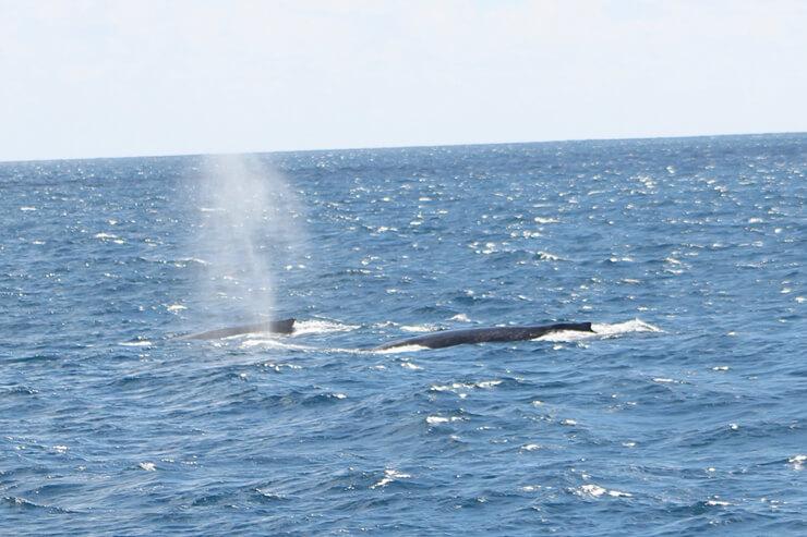 4月までの期間限定のお楽しみ!クジラ探しの旅へ