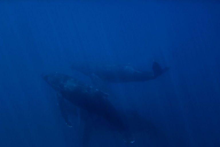 ツアー中に野生のクジラを水中で発見!