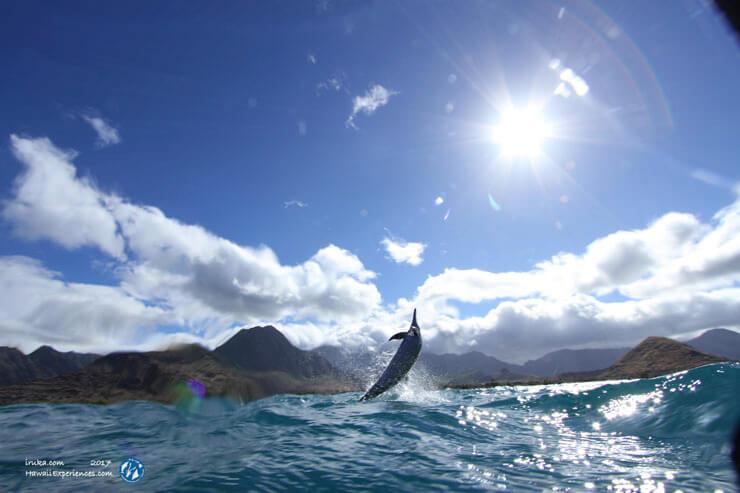 野生のイルカと泳いだ感動が予想以上に胸に響いた