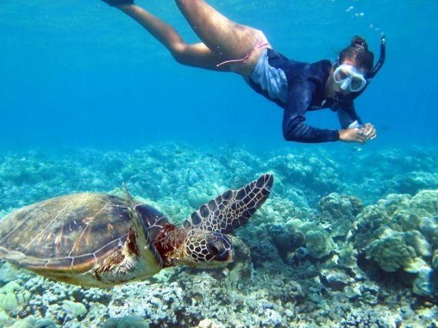 世界各国の参加者と巡る海ガメツアー