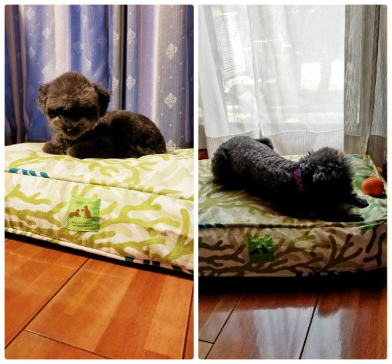 カルビン&スージー・オリジナルベッド&おもちゃ・クロエちゃん