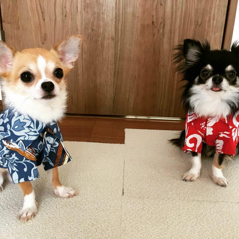 カルビン&スージー・オリジナルアロハ・キナコ&アズキちゃん