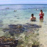 英語での交流+ハワイを堪能できる海ガメツアー