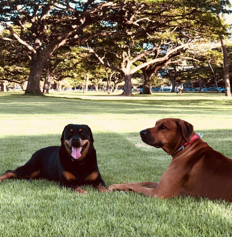 カルビン&スージー・StellaとTuiが公園で休憩中