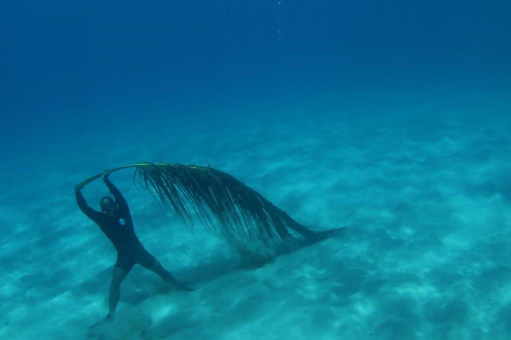『海の中のアリエッティ』