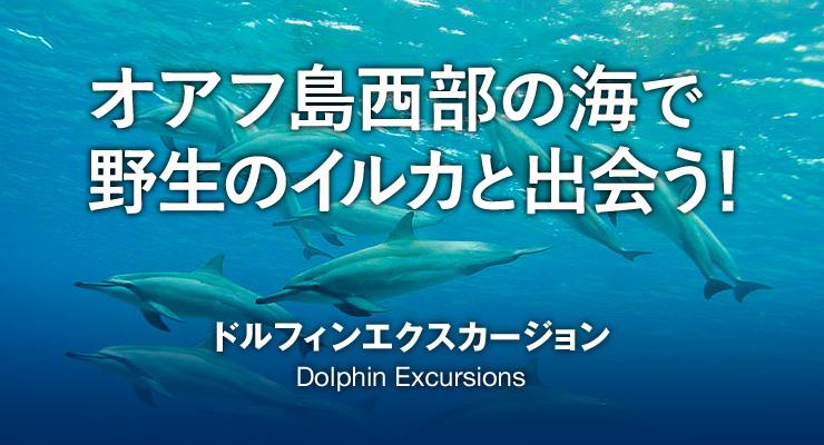 オアフ島西部の海で野生のイルカと出会う! ドルフィンエクスカージョン