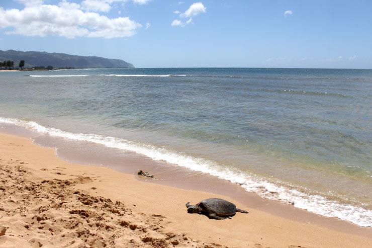 現地からお届け!  ハワイのお得情報