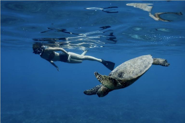 なぜハワイではウミガメが人気なのか?