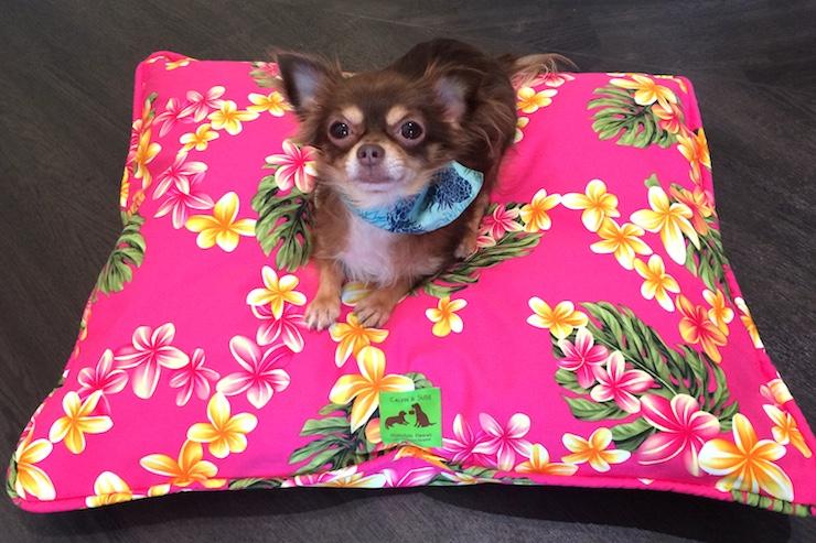ペットのおみやげにアロハクッションベッドが新発売