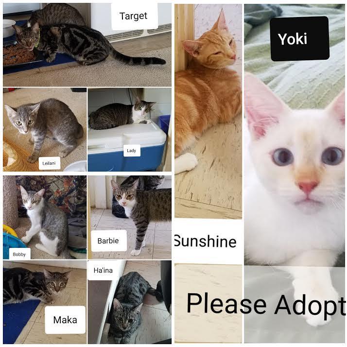 ☆C&S動物愛護団体より・子猫の新しいおうちを探しています