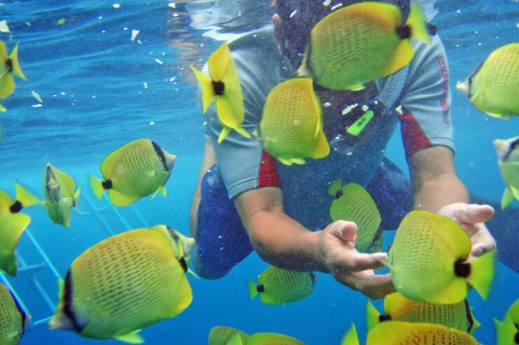ウミガメや鮮やかな熱帯魚にも触れあえるドルフィンツアー!